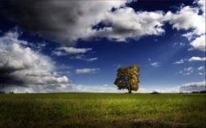 2199-un-arbre-au-milieu-de-la-plaine-WallFizz